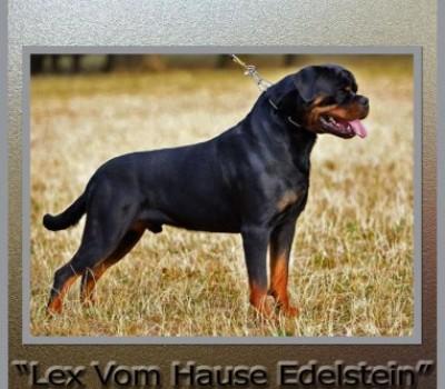Permanent Link to CH. LEX VOM HAUSE EDELSTEIN