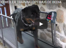 Permanent Link to OPTIMUS DE BEDIA TRAINING