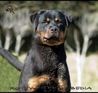 Permanent Link to CH. J. VICTORIA DE BEDIA