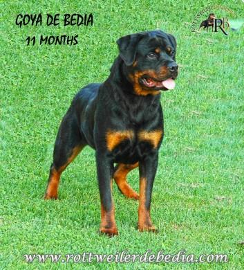 GOYA DE BEDIA