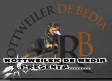 """Permanent Link to LITTER """"R"""" DE BEDIA  CH. FRANCO DE BEDIA X ELECTRA DE BEDIA"""
