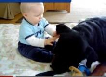 Permanent Link to Rottweiler y Niño