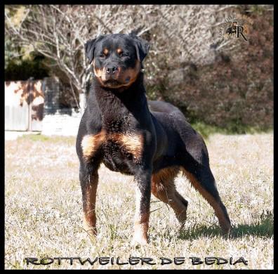 CH. J. VICTORIA DE BEDIA