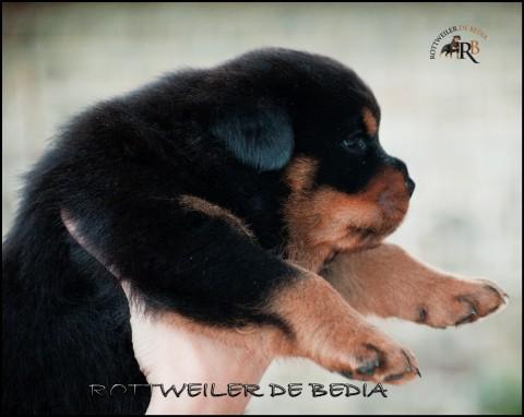 "JACK DE BEDIA X NAOMI DE BEDIA 35 DIAS, CAMADA ""A"" 2016"